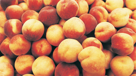 fruits_frais_visuel